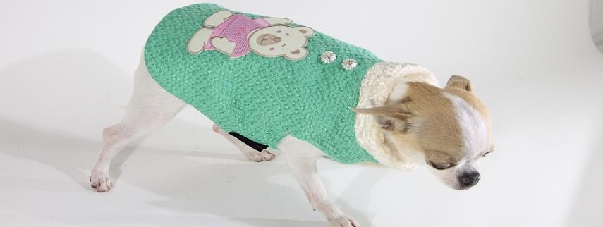 moda canina