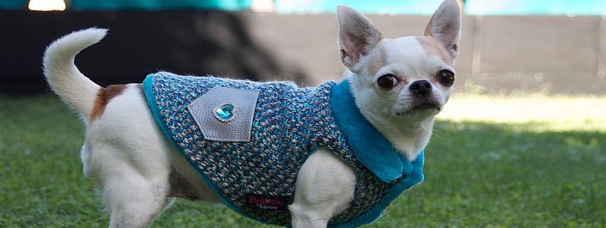 ropa perros chihuahua