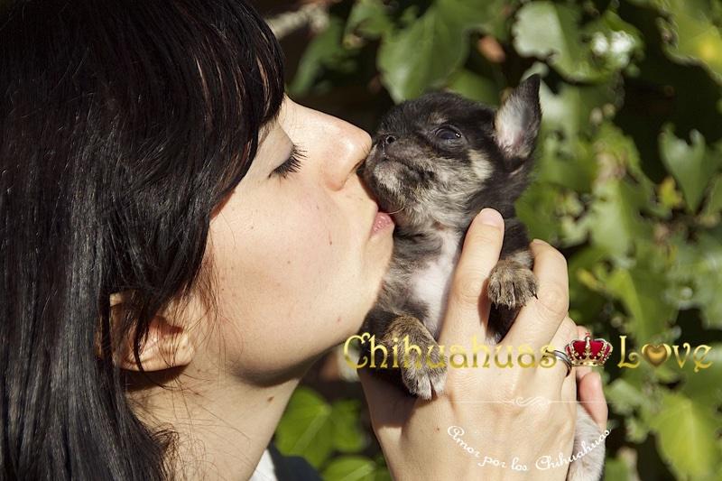 amar raza chihuahua