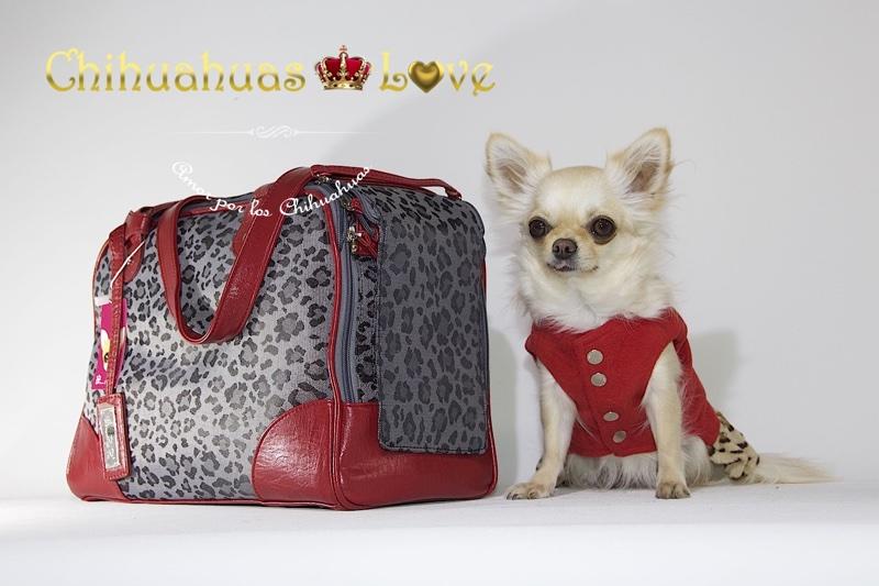 bolsos viaje chihuahuas