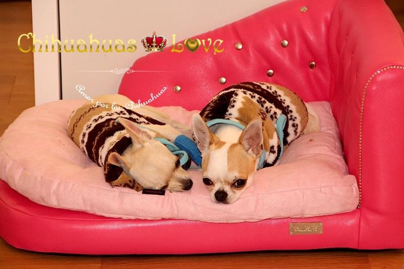 camas chihuahuas