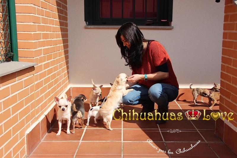 etica criadores chihuahua