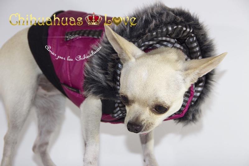 curar catarros chihuahuas