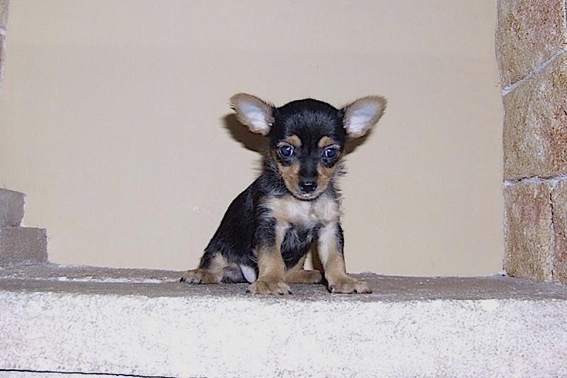 esto es un perro mestizo