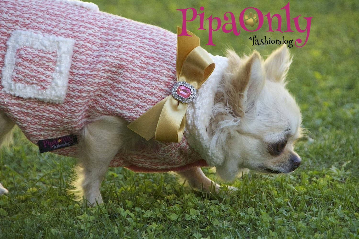 pipa only ropa chihuahuas