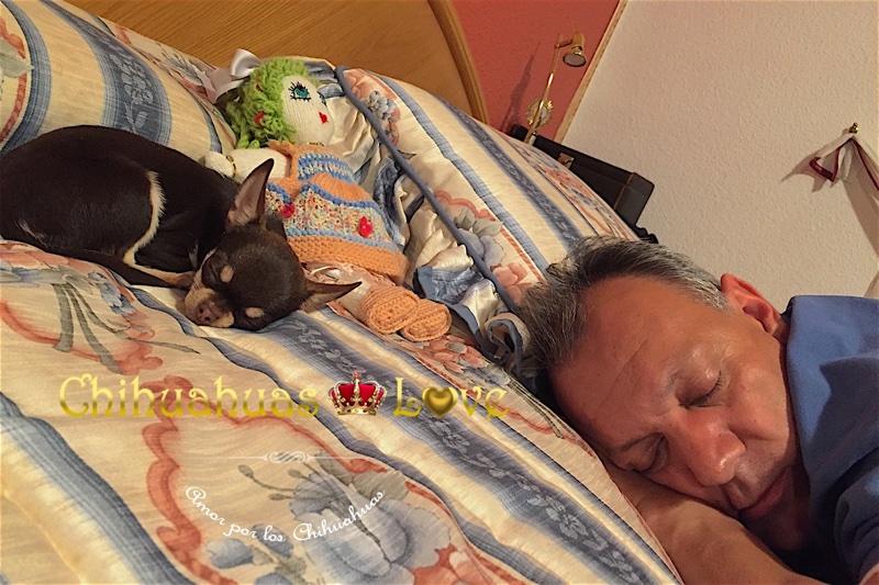 proposito vida chihuahuas