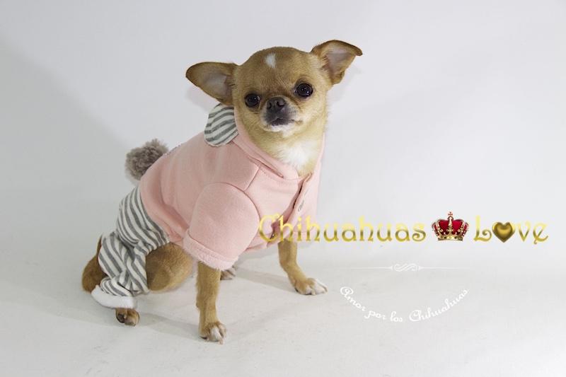 ropa chihuahuas abrigar